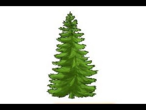 Drawn fir tree easy How How tree to tree