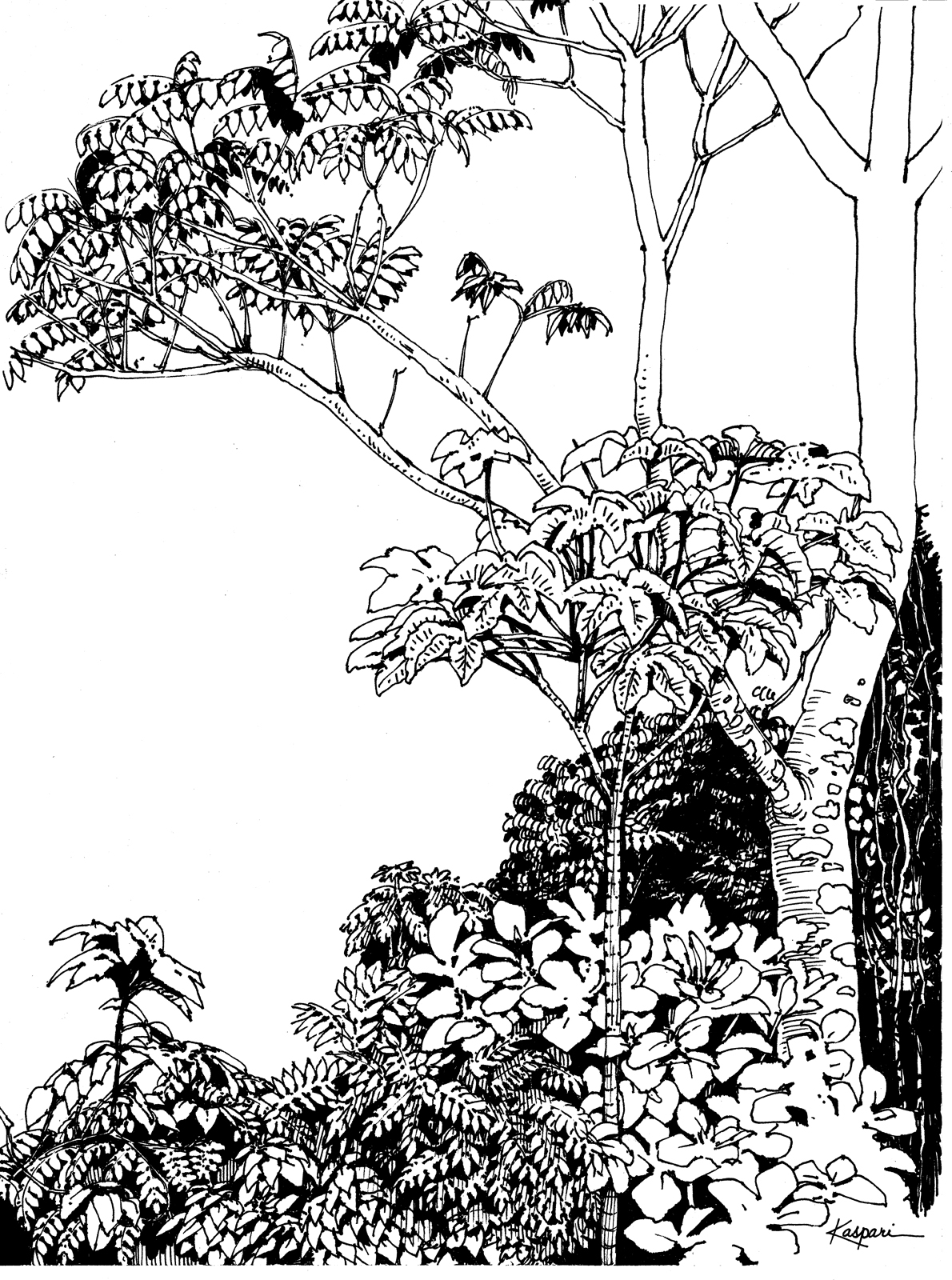 Drawn rainforest tropical forest The Pen Drawing Ink Plein