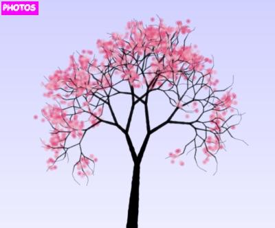 Drawn sakura blossom logo Blossom Drawing Blossom Tree Blossom