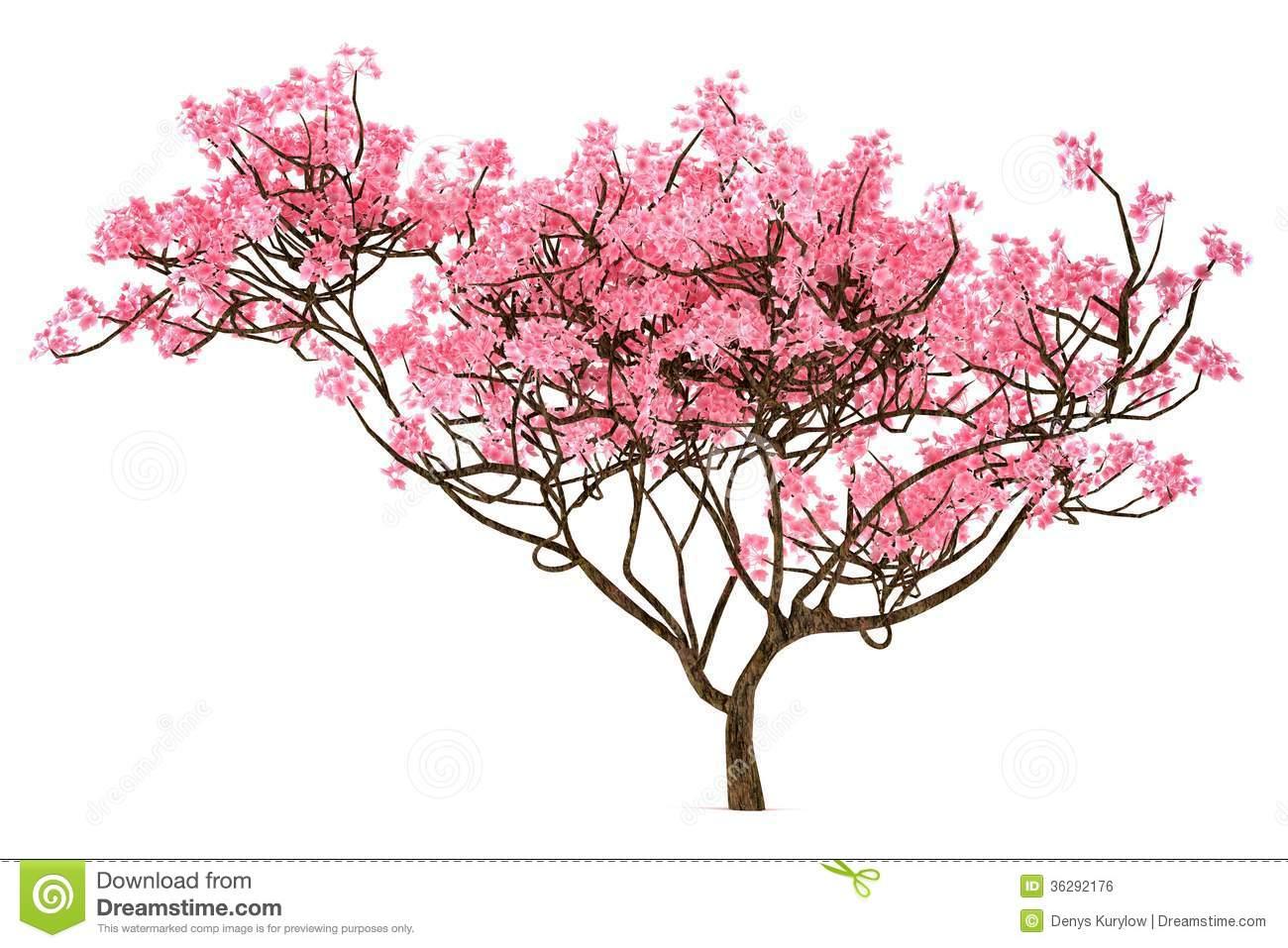 Cherry Tree clipart sakura Free Cherry Clipart Clipart Tree