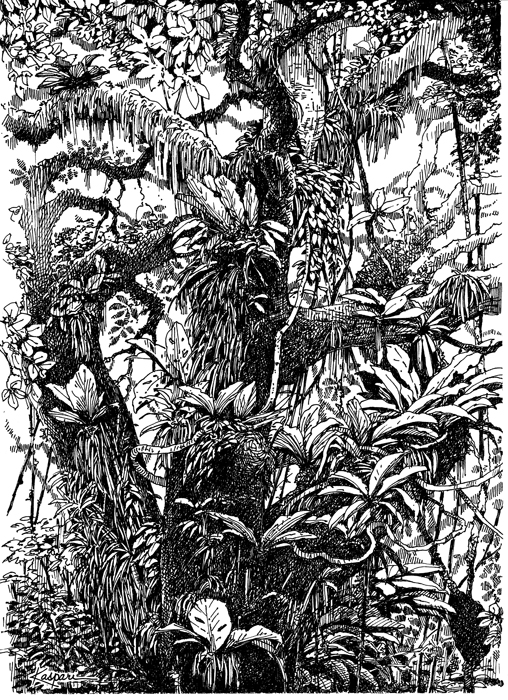 Drawn rainforest pen and ink Drawings Drawings Ink and Air