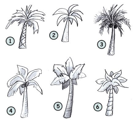 Drawn palm tree step by step #3