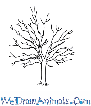 Drawn racoon tree drawing How Draw a to Tree