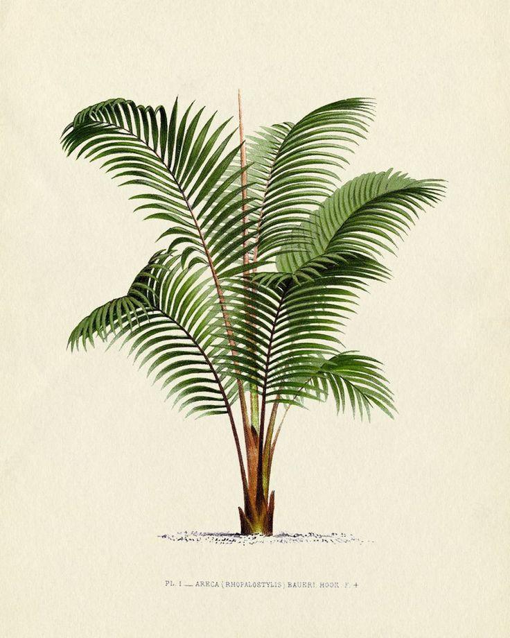 Drawn palm tree retro #1