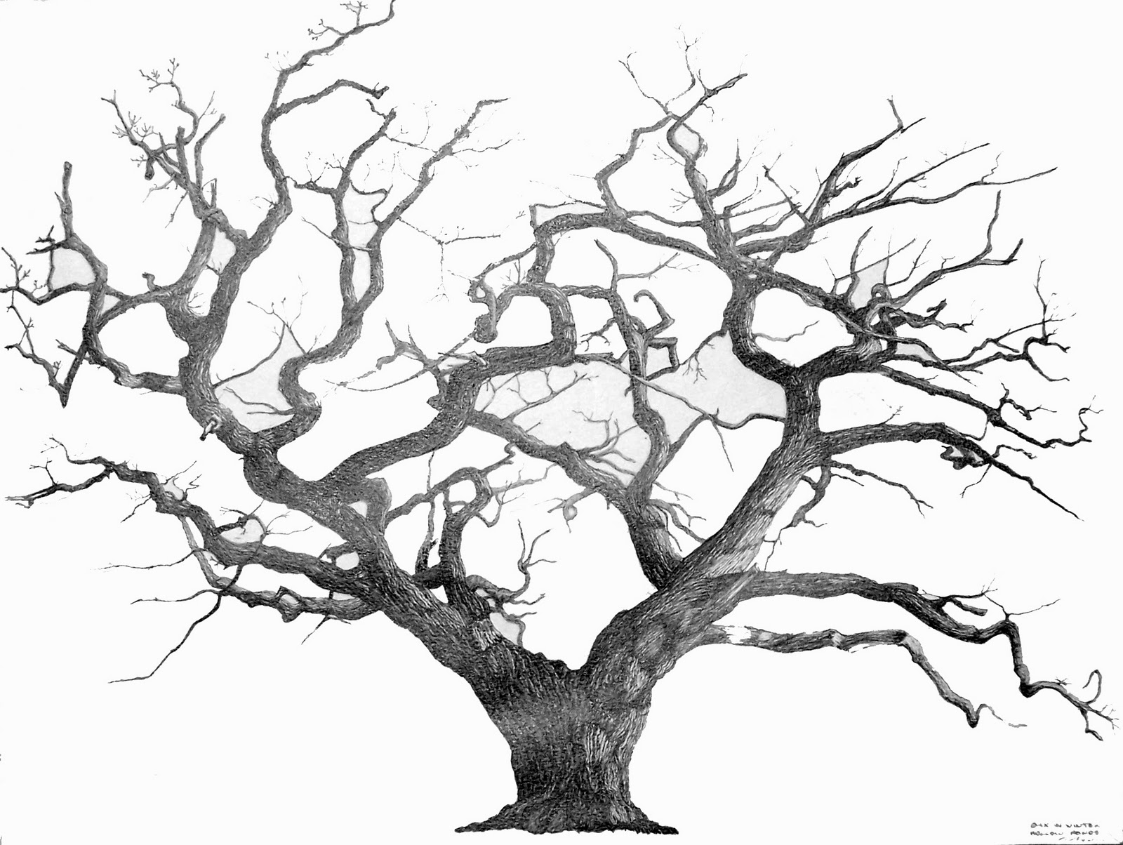 Drawn tree winter tree And Best 25+ Find Drawing