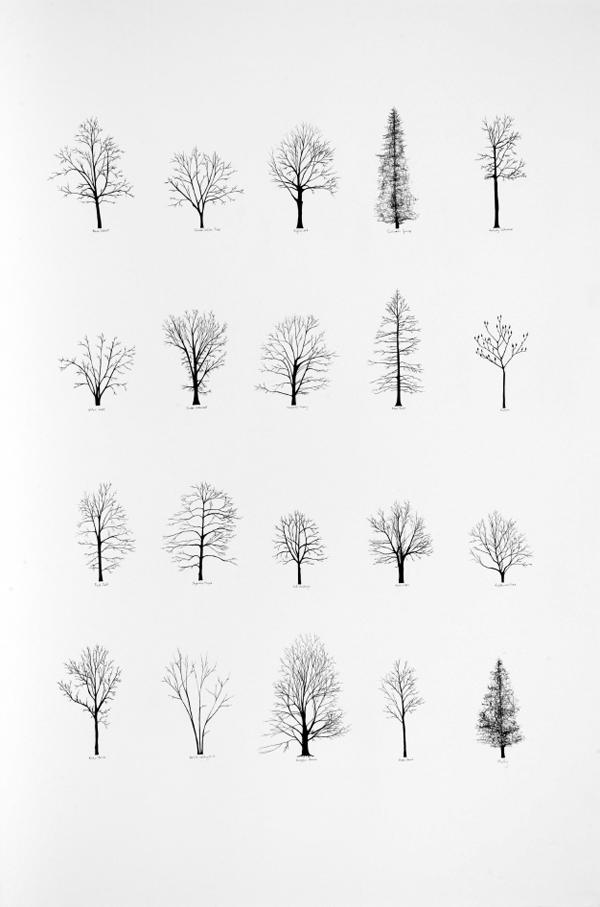 Drawn tree winter tree Fall white winter Explore &