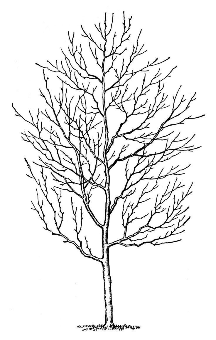 Drawn tree winter tree Winter Pinterest Vintage on Best