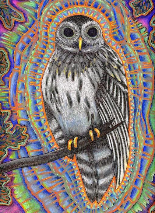 Drawn triipy owl 31 Trippy Pictures  Owl
