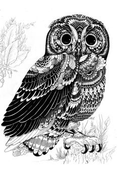 Drawn triipy owl Pinterest on drawing best images