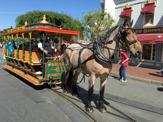 Drawn trolley gold horse Disneyland Drawn Picture Park Park: