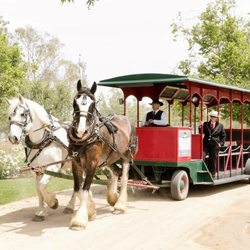 Drawn trolley camel States 25 CA Tours Carriage