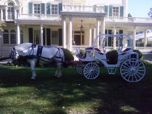 Drawn trolley double horse Carriage Drawn Wedding Carriage Horse