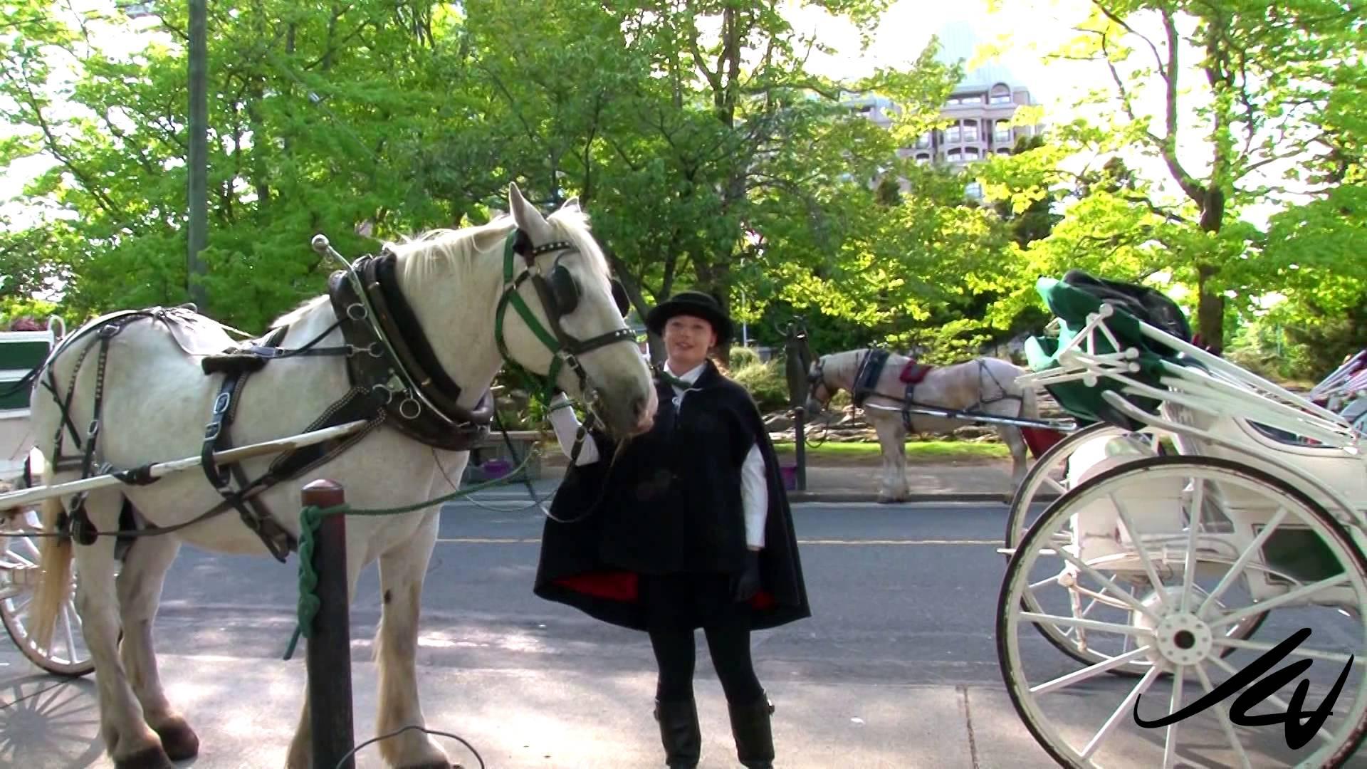 Drawn trolley friesian horse Drawn Tally ho of Giddy