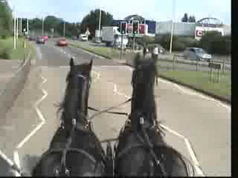 Drawn trolley friesian horse And to town Hook Friesian