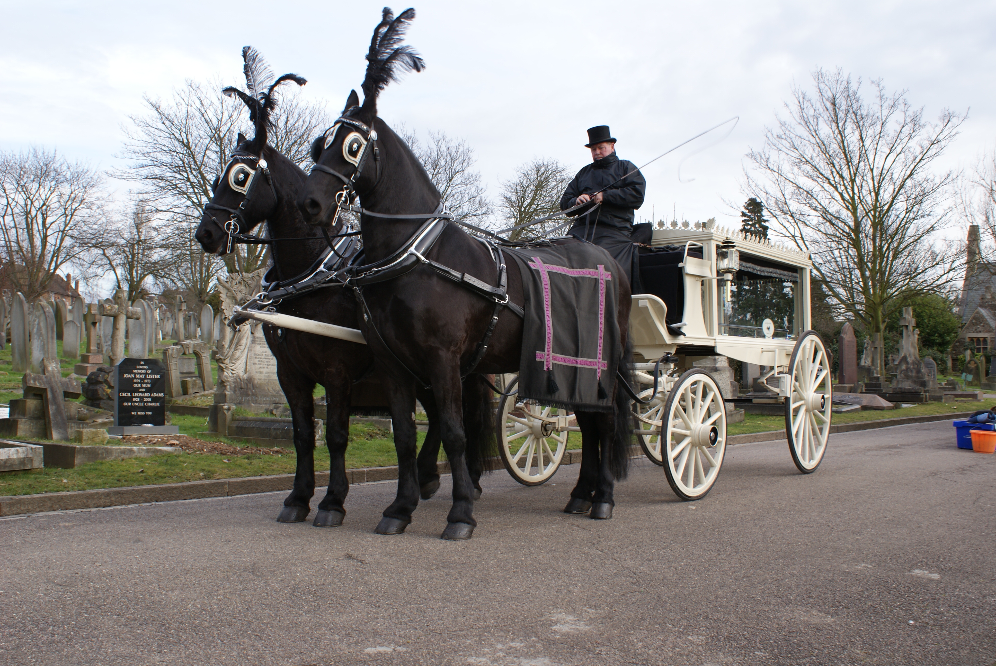 Drawn trolley friesian horse Call Hire about us /
