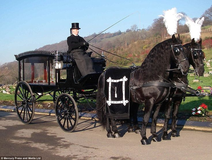 Drawn trolley friesian horse Funerale great great smashes and