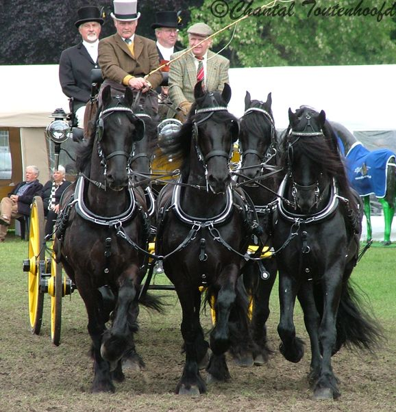 Drawn trolley friesian horse Pinterest carriage and #Horses images