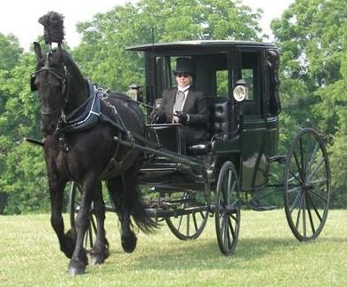 Drawn trolley friesian stallion In tail third traffic yrs