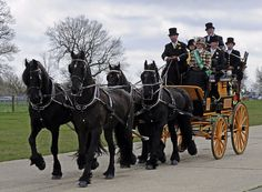 Drawn trolley friesian stallion Friesian place Horse carriage on