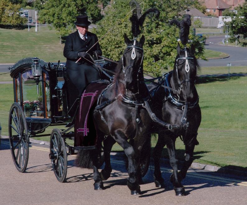 Drawn trolley friesian stallion Horse a ideal Acorn traditional