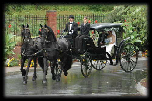 Drawn trolley friesian stallion  Majesty and Rides Carriage
