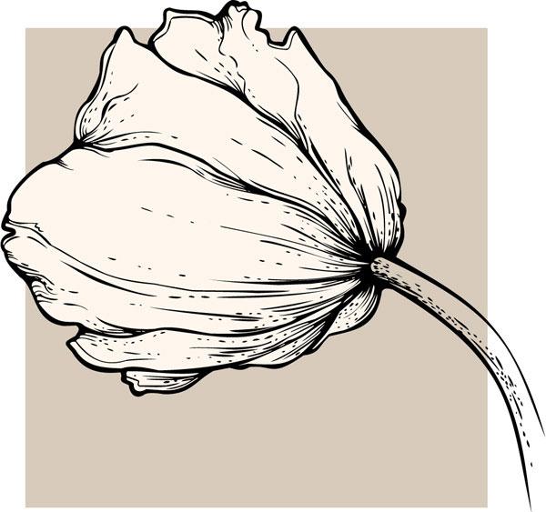 Drawn tulip Background Vivid Tulip background Vector