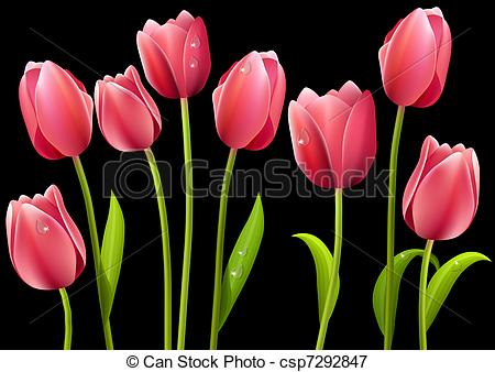 Drawn tulip Leaves Set of flowers with