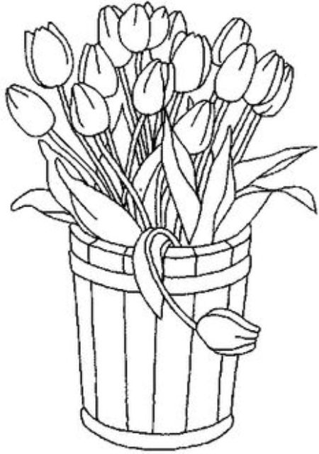 Drawn tulip  tulip bunga Mewarnai yang