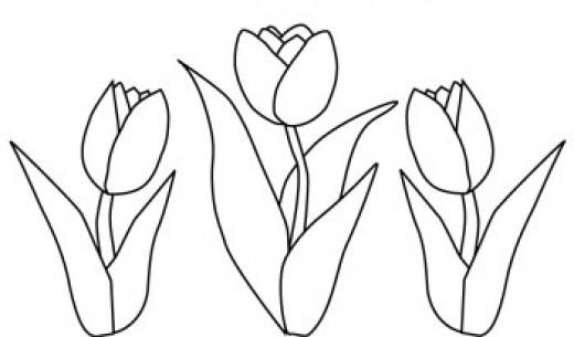 Drawn tulip Drawing Printable [29 pages jpg