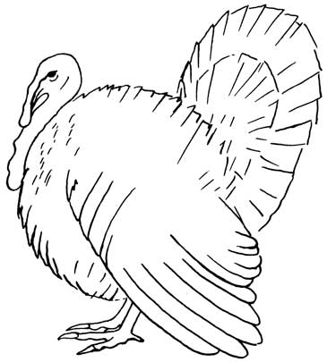 Drawn turkey #10