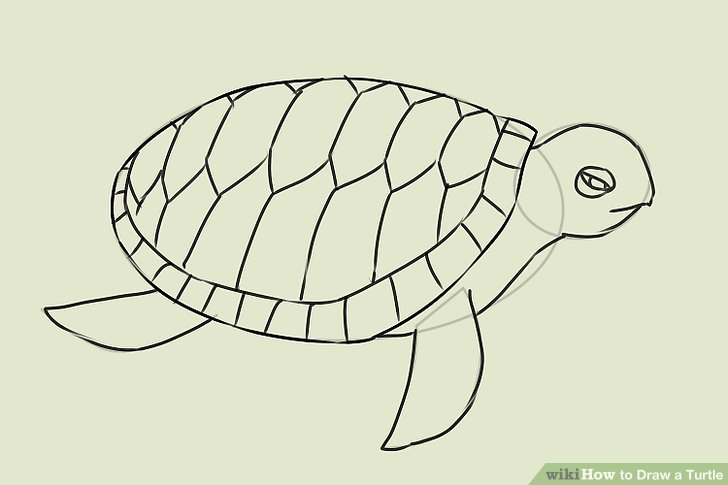 Drawn turtle Titled a Draw Turtle 16