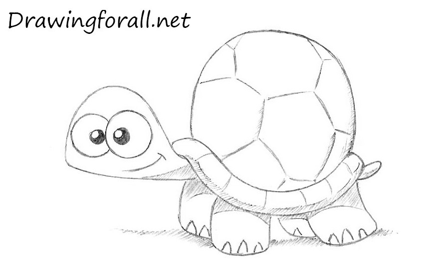 Drawn turtle To a Draw Cartoon How
