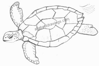 Drawn turtle Drawing Drawings Turtle Turtle