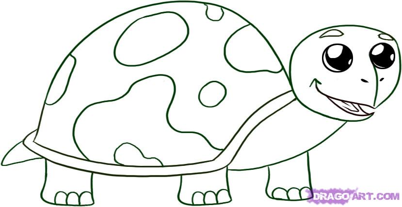 Drawn reptile baby 5 draw turtle to Baby