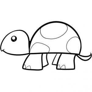 Drawn turtle 5 to How draw to