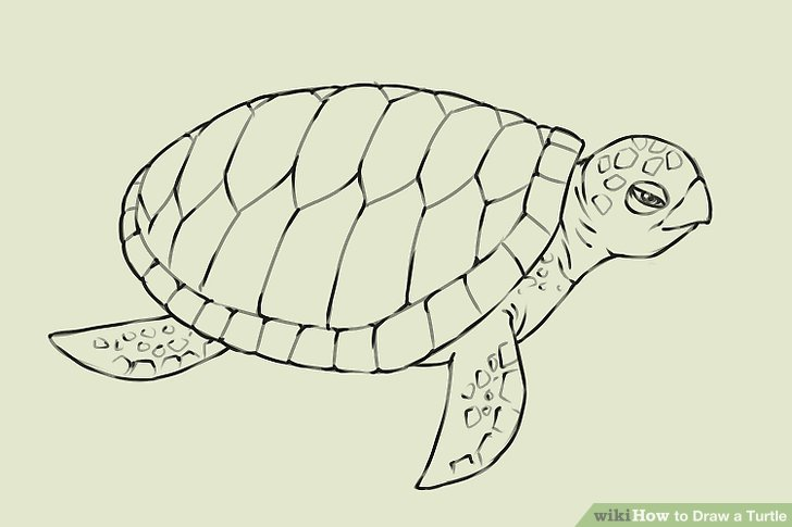 Drawn turtle Titled a Draw Turtle 18