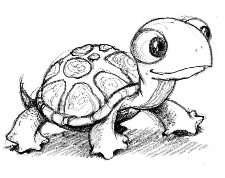 Drawn turtle Drawing Realistic Turtle Art Drawing