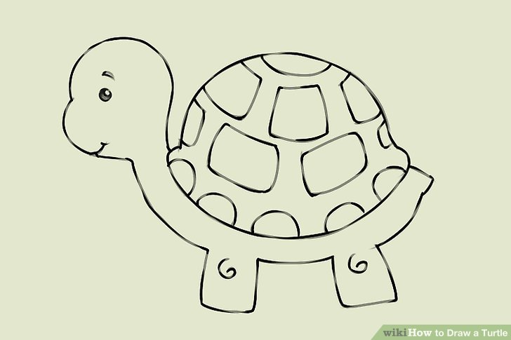 Drawn turtle Titled a Draw Turtle 8