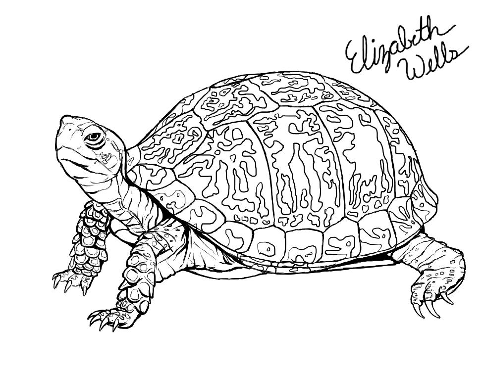 Drawn sea turtle box turtle DeviantArt Box Eastern by Eastern