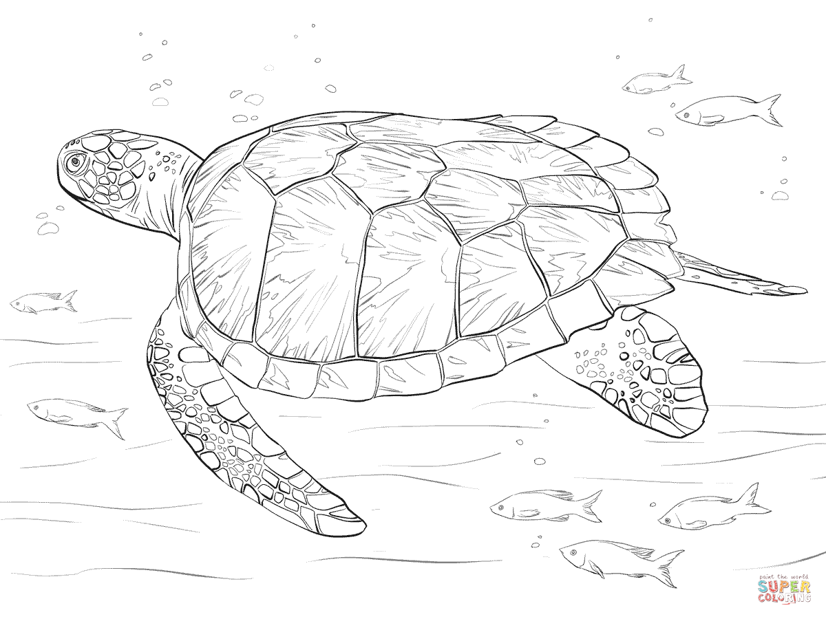 Drawn sea turtle colouring picture Page coloring coloring free turtle