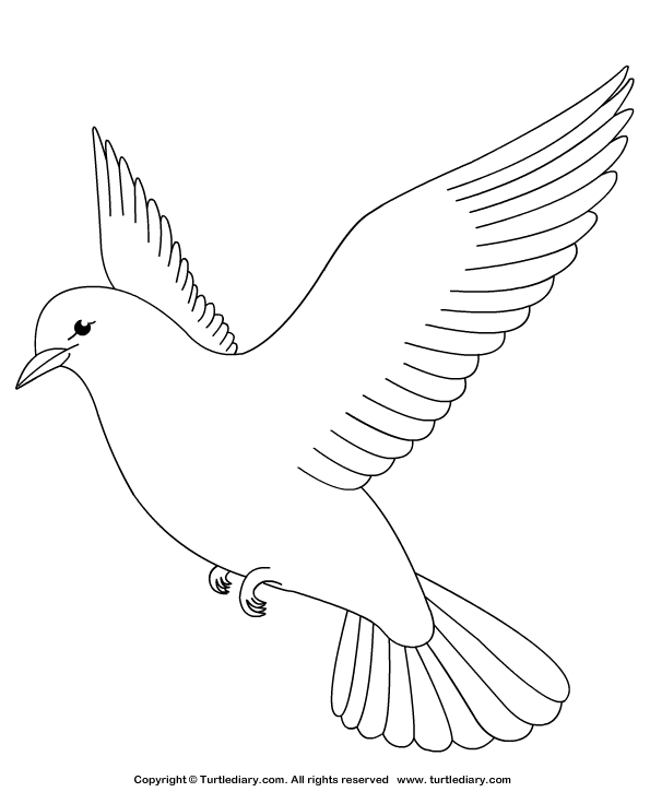Drawn turtle dove #9