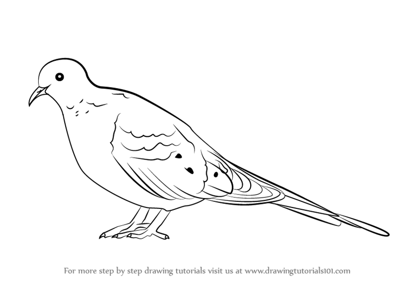 Drawn turtle dove #15