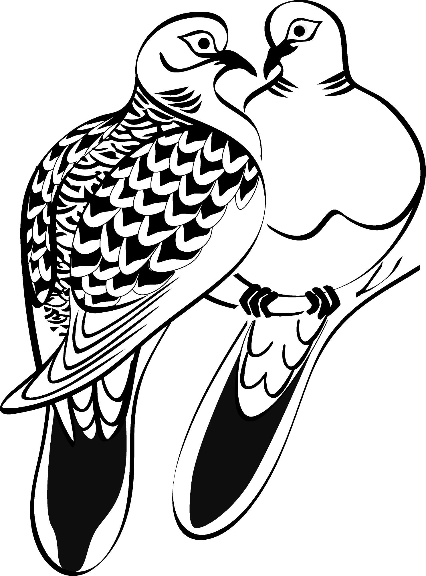 Pidgeons clipart turtle dove Design Line turtle Google Google