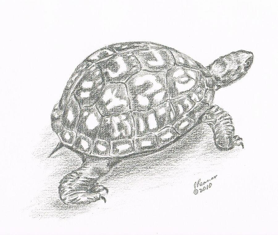 Drawn sea turtle box turtle Box Box Drawing Renner by
