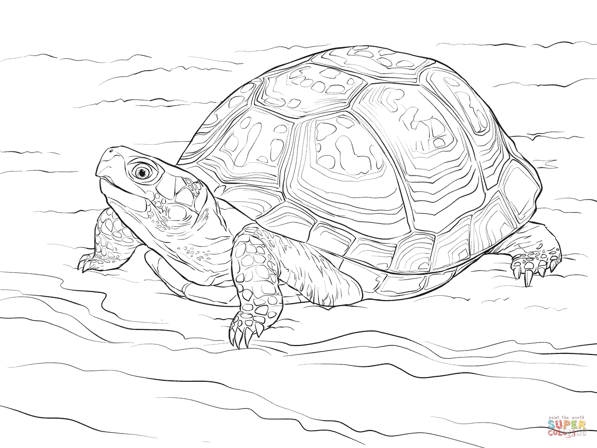Drawn sea turtle box turtle Pages Box Click coloring Eastern