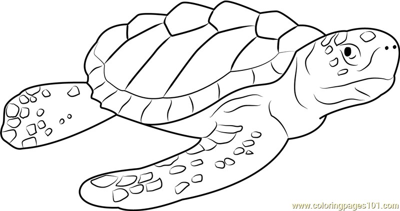 Drawn sea turtle loggerhead turtle Free Logger Page Page Pages