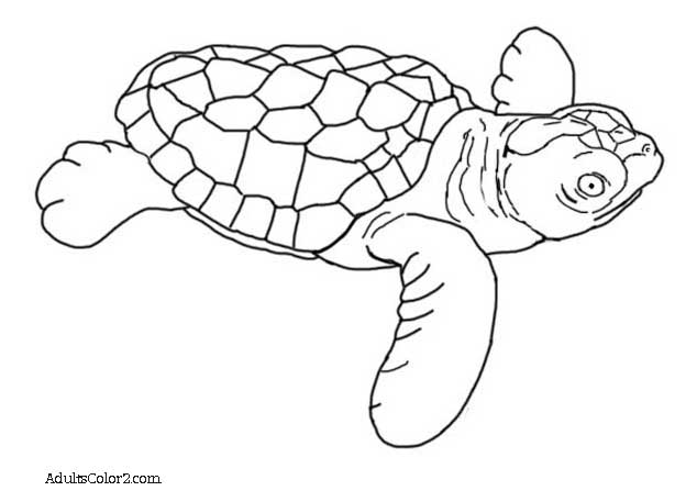 Drawn sea turtle loggerhead turtle Baby Sea Loggerhead Help hatchling