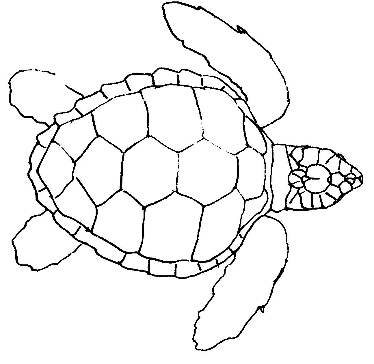 Drawn sea turtle line drawing Turtle Drawing Sea view turtle