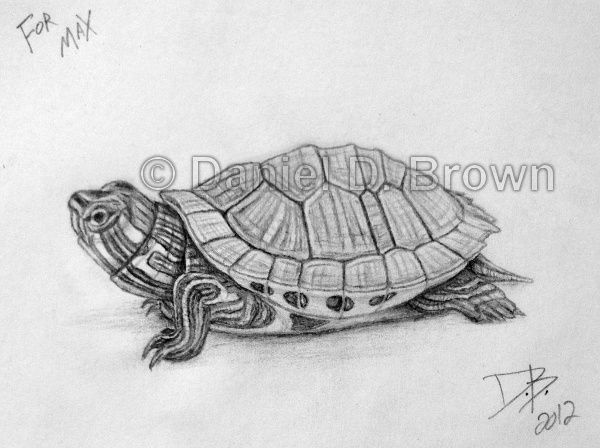 Drawn pencil turtle On best 8 Drawing turtle