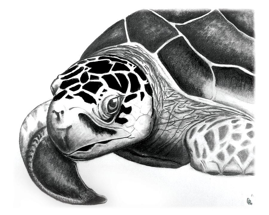 Drawn pencil turtle  ORIGINALONLY Sea Sea 9